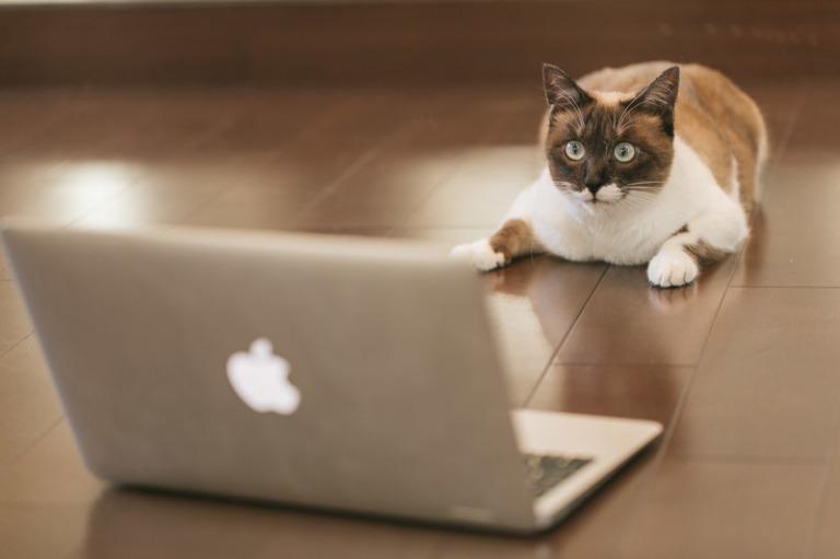 注意深くPCを見る猫