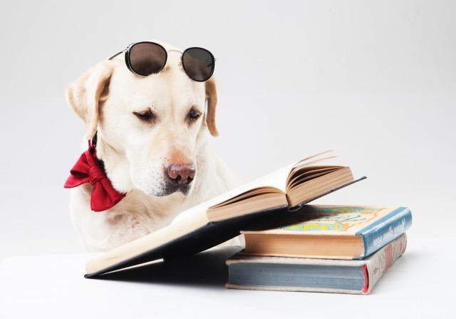 読書するワンちゃん