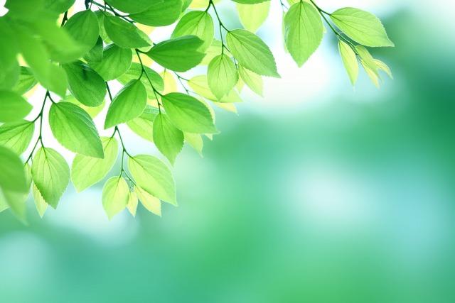 新緑のイメージ