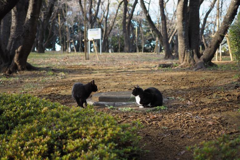 千葉公園の猫